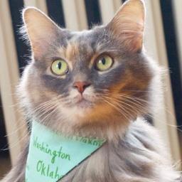 Maine Coon Cat Rescue Minneapolis