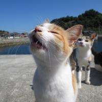 猫の島 青島