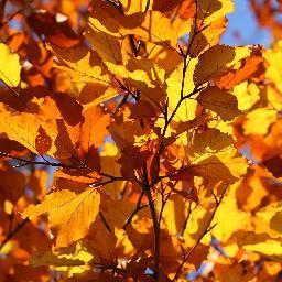 @Herbstwiesbaden