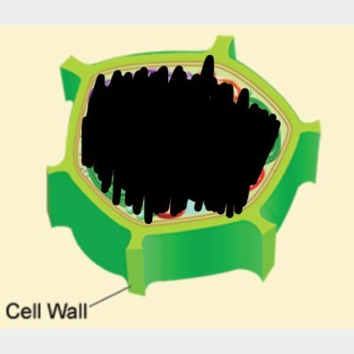 vote cell wall cellwall4prez twitter