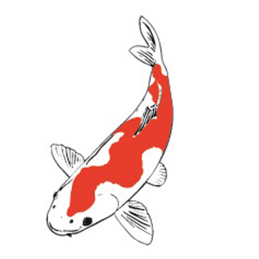 Japanese koi company japanese koi co twitter for Koi carp henlow