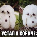 Вова Стук (@1971Bolod9) Twitter