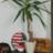ZandersPflanzeLasse