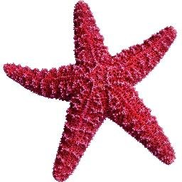 sea star imthestarfish twitter