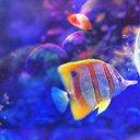ปลาน้อยลอยทะเล~ (@22nOJ0QxqJRV2Du) Twitter