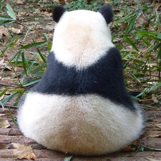 Travelling Panda