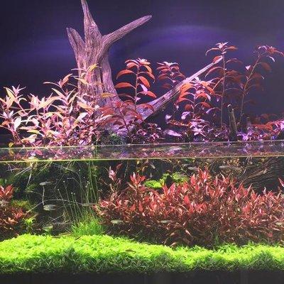 Nature aquariums naquariums twitter nature aquariums fandeluxe Images