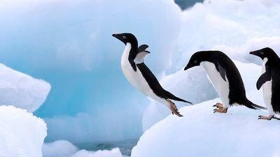 「ファーストペンギン」の画像検索結果