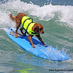 Surf Dog Ricochet