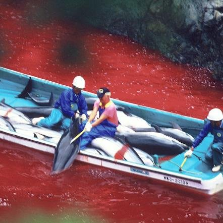 dolphin massacre in exchange for self righteousness Dr jane hodgson v minnesota us essay examples dolphin massacre in exchange for self-righteousness 517 words 1 page the negative effects of globalization on.