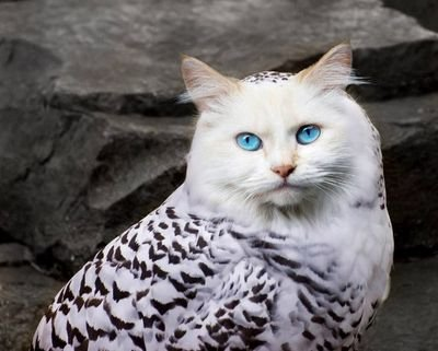 Фото обкуренный кот