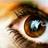 Glaucoma Foundation