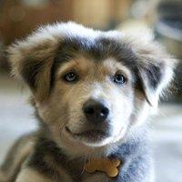 Mixed Puppies