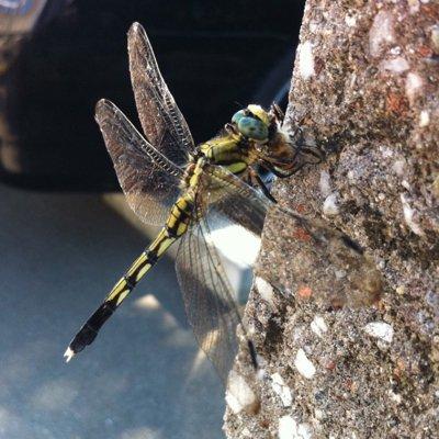 世界のかっこいい虫。高画質な画像まとめ。