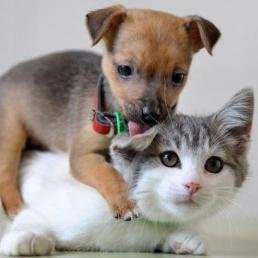 Dog And Kitty At Dognkitty Twitter