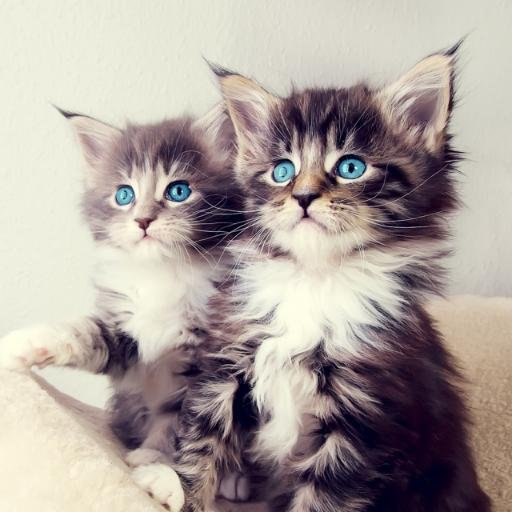 Kitty Cats theKittyCats Twitter