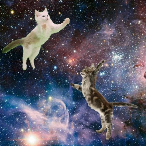 Cats in space (@CatsLoveSpace) | Twitter