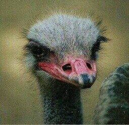 Rhinogobia On Twitter Krake Häkeln Für Frühchen Crochet