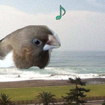 文鳥が空に飛び立つ演出、 日本では飼い鳥である文鳥が野生の鳥かと思われるのでやめてほしいです... このあとあの子がおうちに帰れるか、新しいおうちが見つかるんですか...?