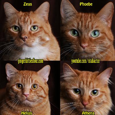 Image of: Rarest Animal Ginger Kitties Four Visit Isle Of Wight Ginger Kitties Four On Twitter