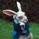conejo blanco (@13conejoblanco) Twitter