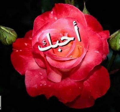بحبك يا عمري Ft7assan טוויטר