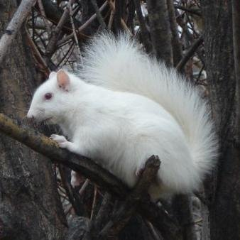 White Squirrel Treasures