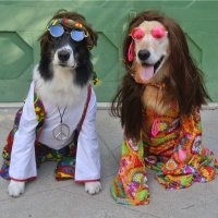 Chaucer and Molly | Social Profile