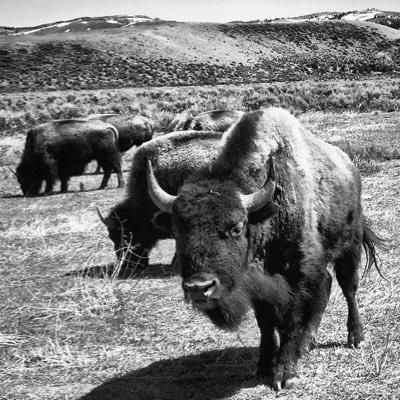 Bison Union Co.
