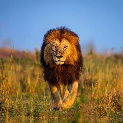 Sergio garate espino espinogarate twitter for Sfondi leone