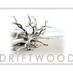 @driftwoodlotion