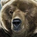 Bear (@GrizzlyKoda) Twitter