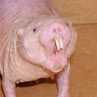 Mole About rats naked