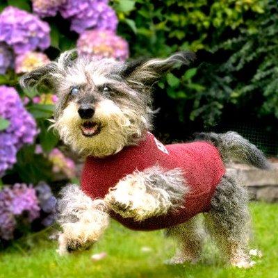 DogEase (@DogEaseUK) Twitter profile photo