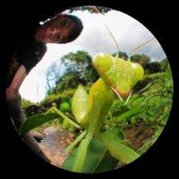 skink chen (@ChenSkink) Twitter profile photo
