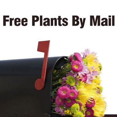free plants freeplantbymail twitter. Black Bedroom Furniture Sets. Home Design Ideas