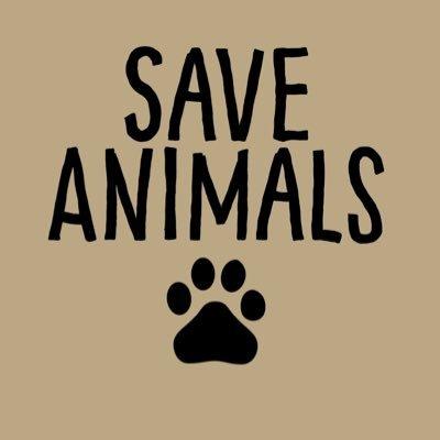 Save Animals (@SaveTheAnimaIs)  Twitter