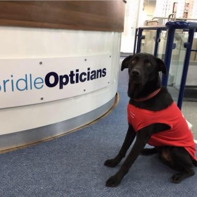 Bridle Opticians