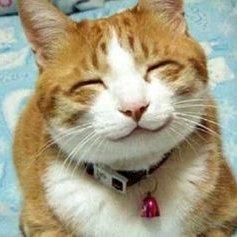 可愛い 面白い 猫画像まとめ Kawaii Neko Gaz Twitter