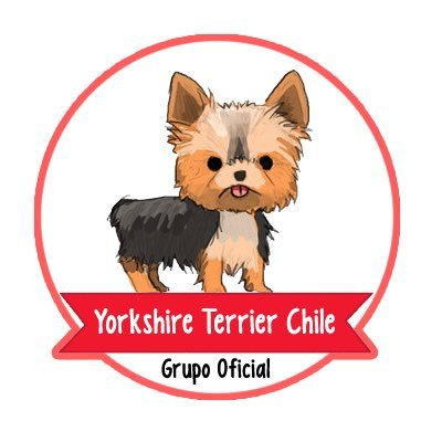 Yorkshire Terrier CL