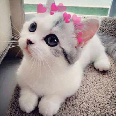 cats with hearts catsnhearts twitter