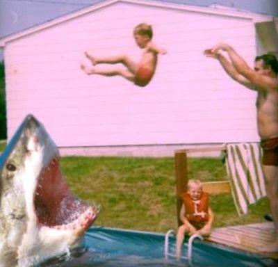 @Shark_Toothday