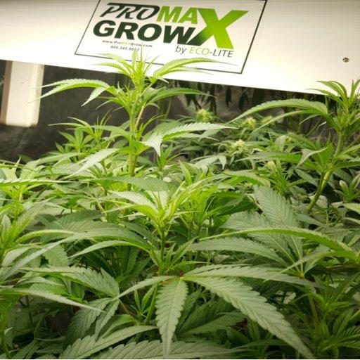 Pro MAX Grow