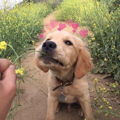 hearts on puppies heartsonpups twitter