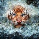 Abhishek Sharma - @am_abhis - Twitter