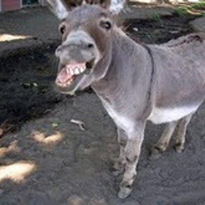 Donkey Poker On Twitter Rgvzoomin Puli Lage Pelli Ki Kuda Letters Rede Ra Paravaledani Pakkaki Velite Palaharam Apyipovu Ra