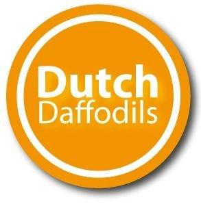 Dutch Daffodils