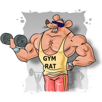 A what rat is gym Gym rat