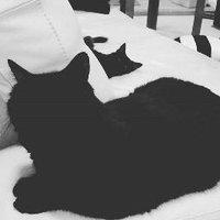 Aus Black Cats