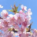 桜 (@1959_sakura) Twitter